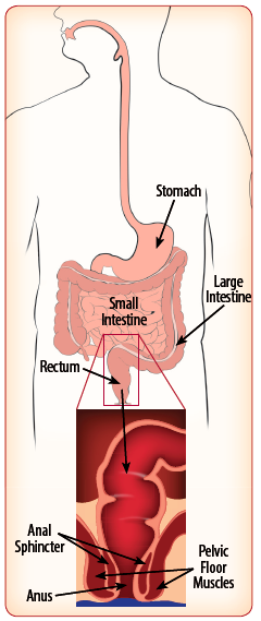 Image of internal organs involved in digestion.
