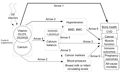 Figure 1: This figure depicts the analytic framework for the proposed health effects of vitamin D with or without calcium. Vitamin D status is shown to be affected by both food/supplements and UV exposure. Calcium status is shown to be affected by food and supplement intake. Clinical outcomes of interest that are believed to be affected by exposures to vitamin D and calcium are shown as arrow 1: these outcomes include bone health, CVD, cancer, muscle function, immune outcomes, pregnancy outcomes, and all-cause mortality (key question 1). Intermediary or surrogate outcomes of interest with good evidence for linkage with clinical outcomes of interest that are believed to be affected by Vitamin D and calcium exposures are shown by arrow 2; these include hypertension, bone mineral density and content, cancer markers, blood pressure, and breast milk or circulating levels of vitamin D/calcium in infants (key question 2). Associations between intermediary indicators of exposure (serum vitamin D and calcium balance) and clinical outcomes of interest are shown as arrow 3 (key question 3). Associations between exposures to vitamin D and calcium and intermediary indicators of exposure are shown as arrow 4 (key question 4). Associations between intermediary indicators of exposure and surrogate or intermediary outcomes are shown as arrow 5 (key question 5). Associations between surrogate or intermediary outcomes and clinical outcomes (e.g., bone mineral density and bone health) are shown as arrow 6.